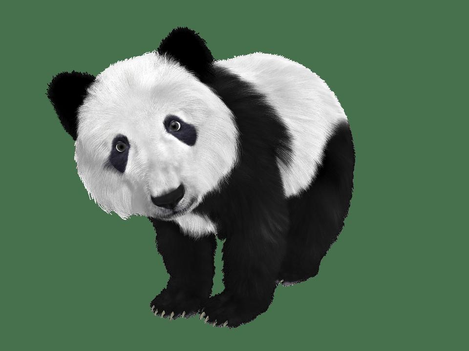 panda algorithme de google contre le contenu de mauvaise qualité